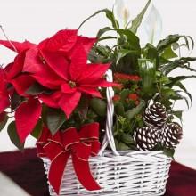 Weihnachts-Deko-Ideen Tafelaufsatz weißen Körbchen Weihnachtsstern tannenzapfen