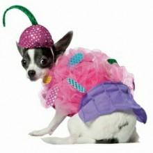 hund-fee-kostuem-karneval-halloween-verkleidung-13