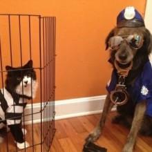 hund-katze-lustige-idee-halloween-cop-gefangenen-18