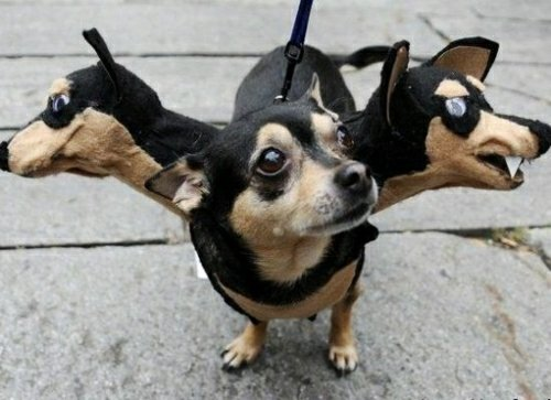 Top witzigsten Halloween Kostüme für Paare, Kinder und Tiere